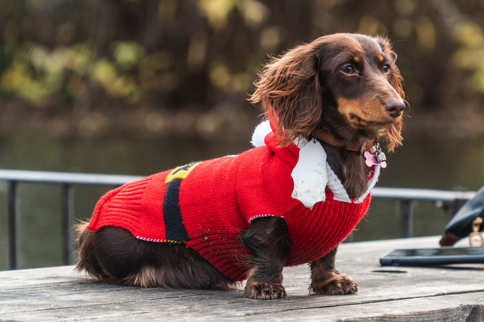 The Canine Story_BMD Jumper Day 2019_Sma