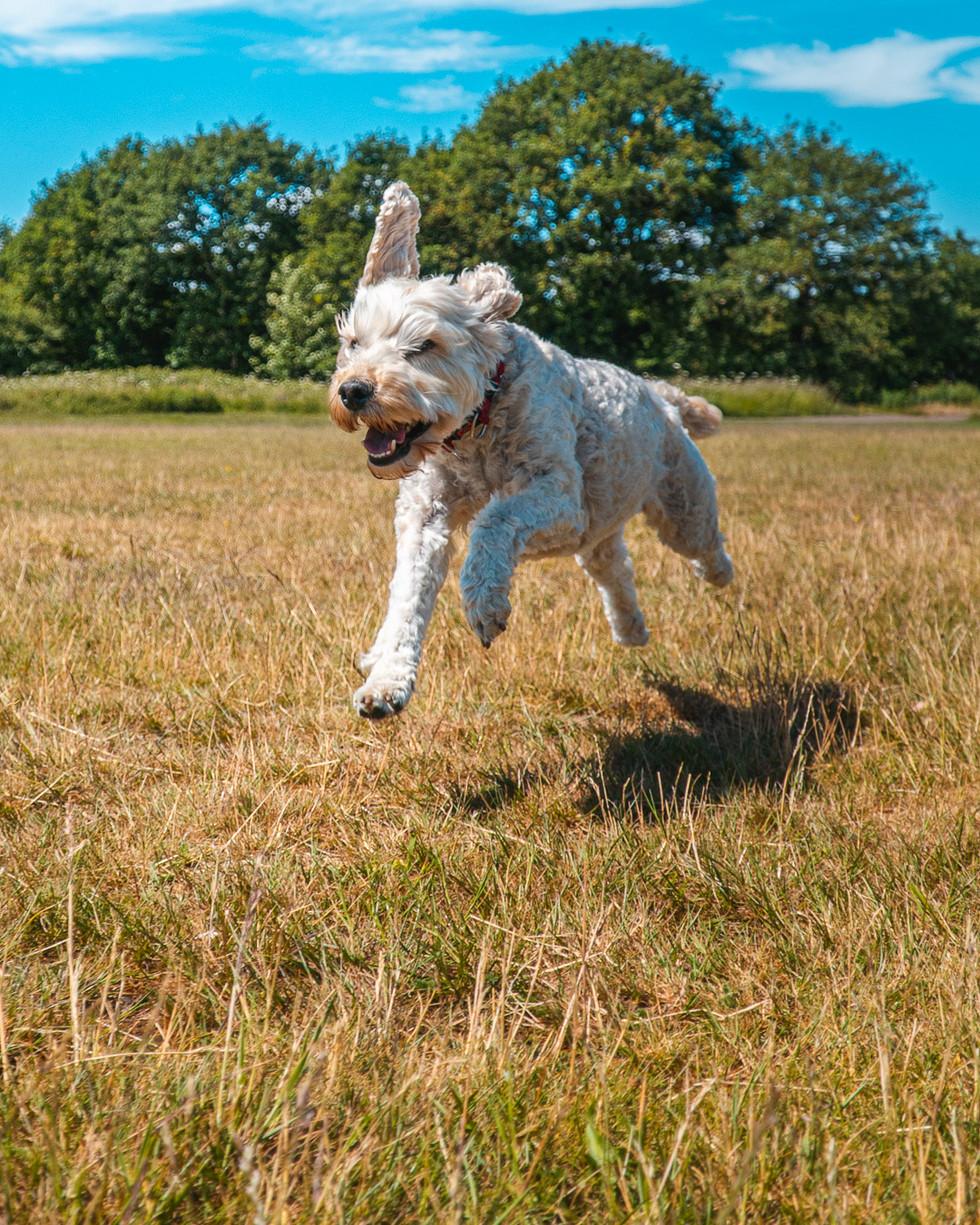 Running Dog-7.jpg
