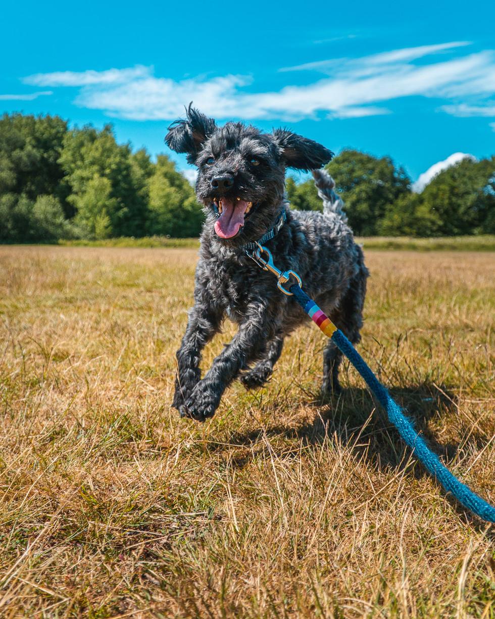 Running Dog-6.jpg