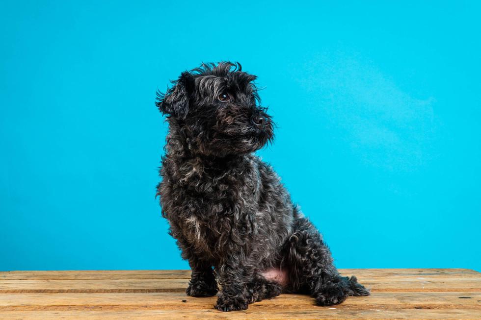 20_02_16 Dog Studio Photography_03 Dougi