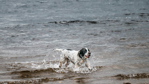 The Perfect Action Shot - Dog Photography