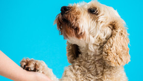 Dog Training | Marker Words and Clickers