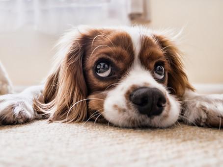 Djurens hälsofrämjande effekter