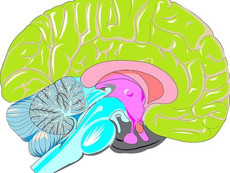 God kognitiv förmåga även högre upp i åldrarna
