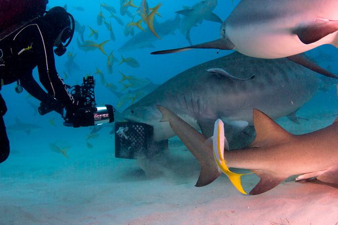 Shark Tales - Bahamas