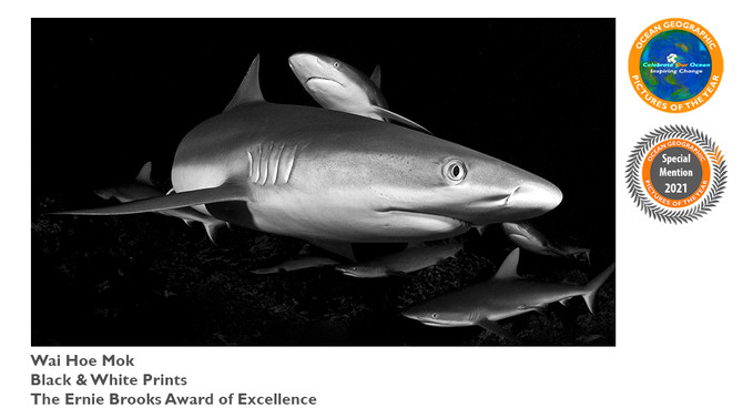Ocean Geographic Pictures of the Year Award 2021