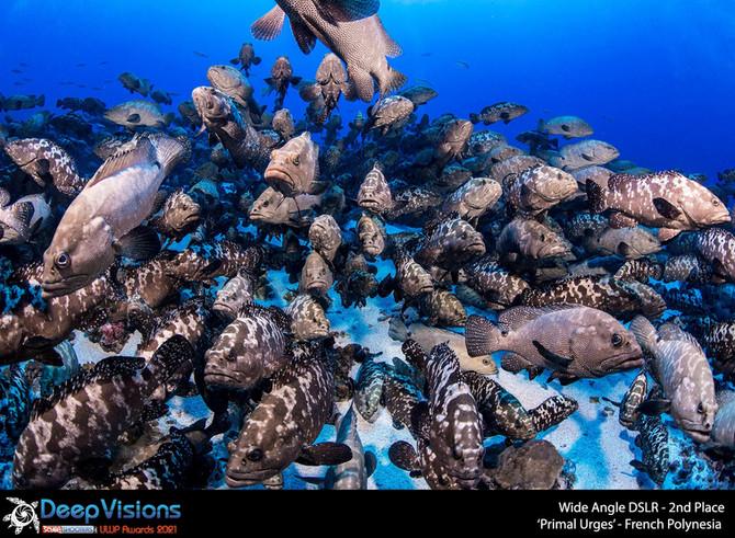 Deep Visions Underwater Photogaphy Awards 2021