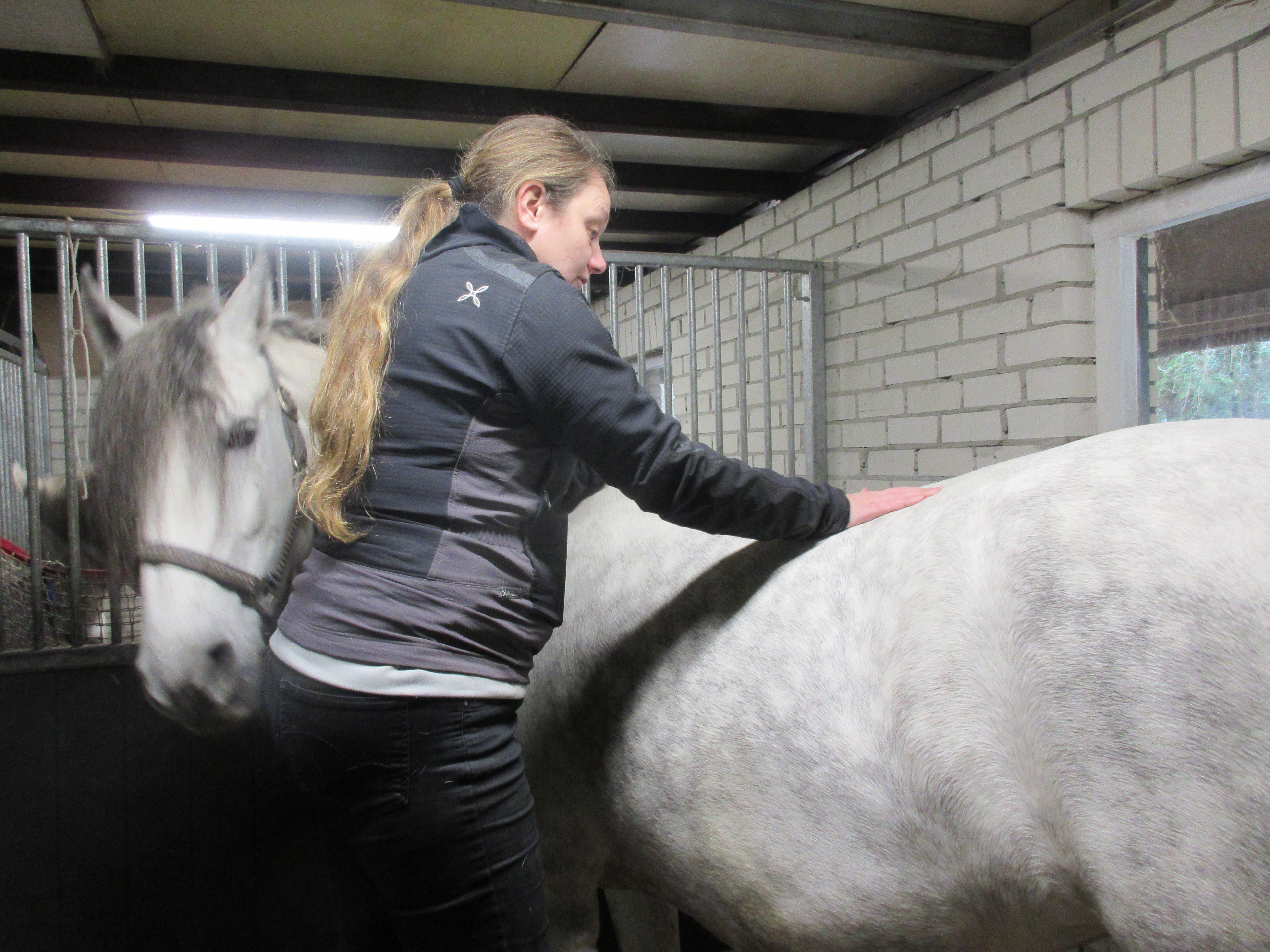 Sportmassage voor paard/pony