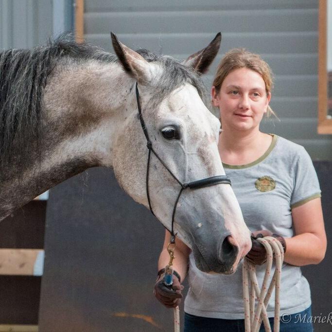 Jonge paarden traject