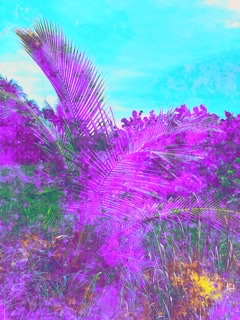 Flowers and Fronds