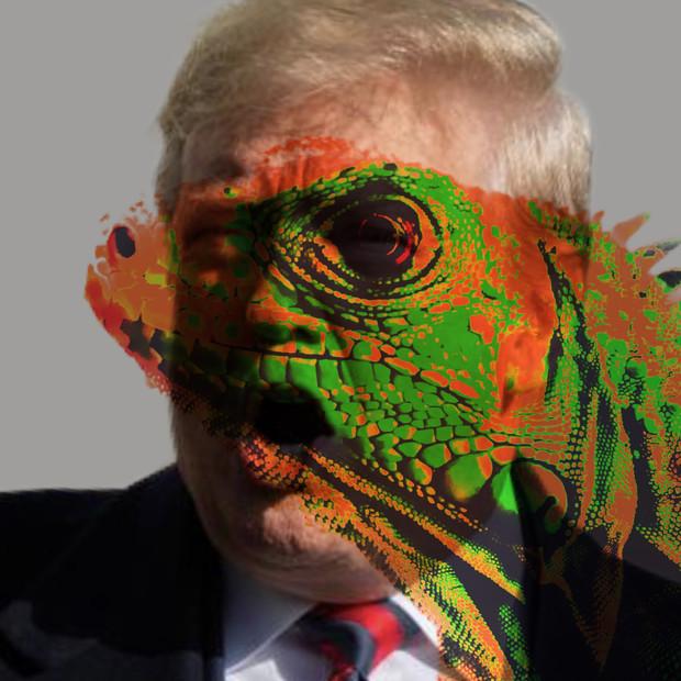 Iguana Stay In Power