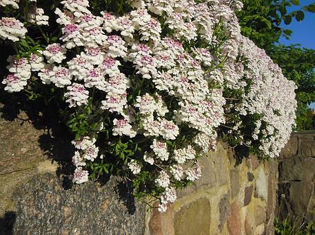 alberi con fiori bianchi