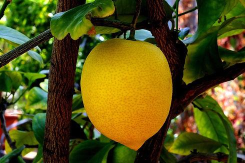 sitruuna ja lehdet.jpg
