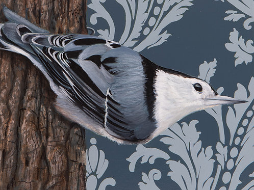 White Breasted Nuthatch Archival Limited Edition Print