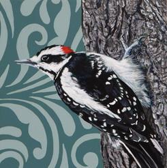 Harried Woodpecker