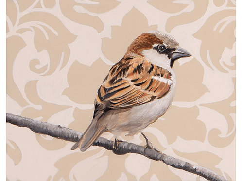 House Sparrow  Archival Limited Edition Print