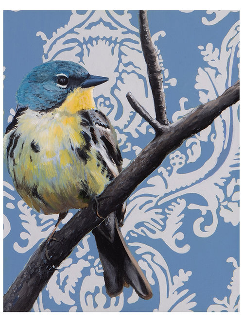 Kirtland's Warbler  Archival Limited Edition Print