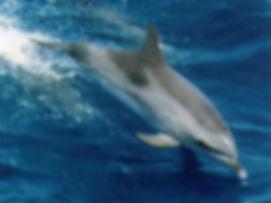 Zachod slonca i delfiny