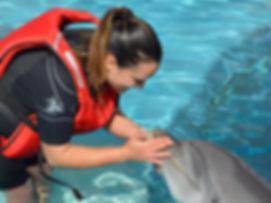 Plywanie z Delfinami