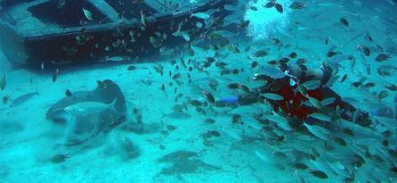 Teneryfa podwodne safari