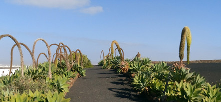 Lanzarote moja własna wycieczka El Patio