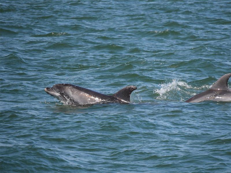 Gran Canaria Delfiny i Zabawa na Statku
