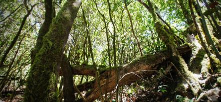 Teneryfa La Gomera 4x4 z Puerto de la Cruz