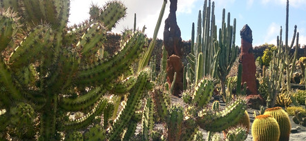 Lanzarote moja własna wycieczka Jardin de Cactus
