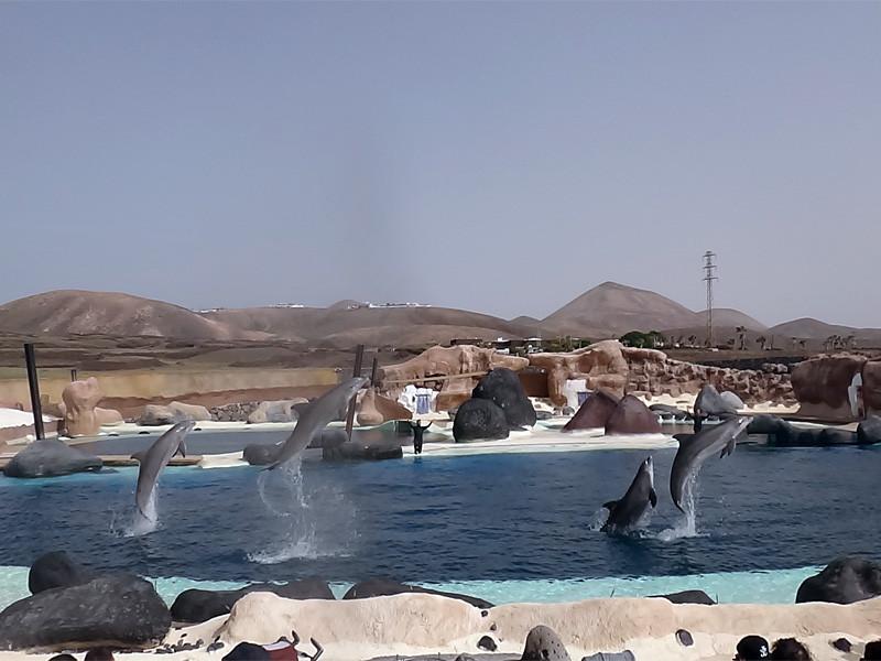 Lanzarote pływanie z lwami morskimi Rancho Texas