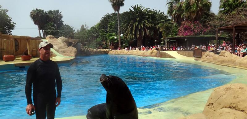 Lanzarote pływanie z delfinami Rancho Texas