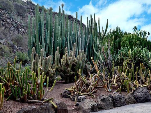 Las Palmas II Ogrod Botaniczny i Wulkan