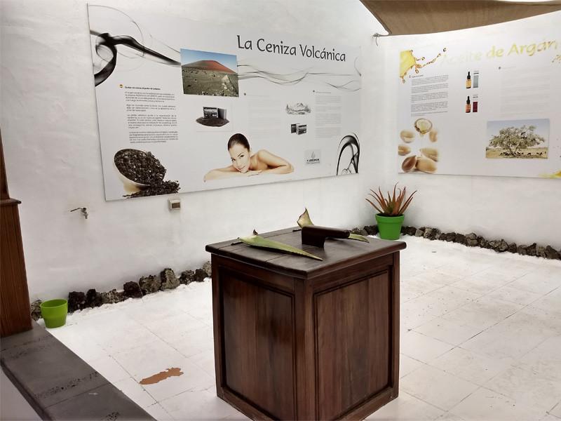 Lanzarote moja własna wycieczka Aloe Vera Teguise