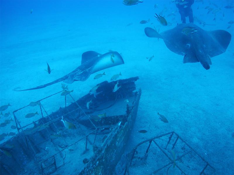 Teneryfa podwodne safari z Puerto de la Cruz