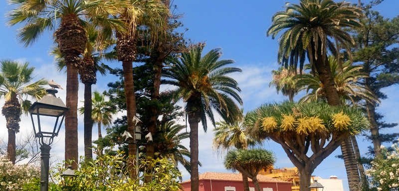 Teneryfa Icod de los Vinos-La Orotava-Puerto de la Cruz