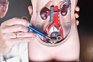 Urologia.png