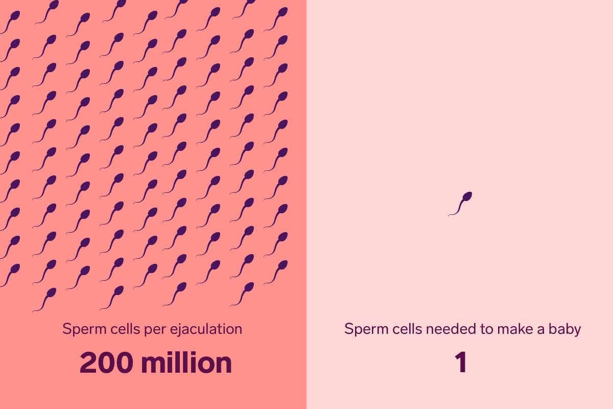 a33f3e70-sperm-survival-img (1)
