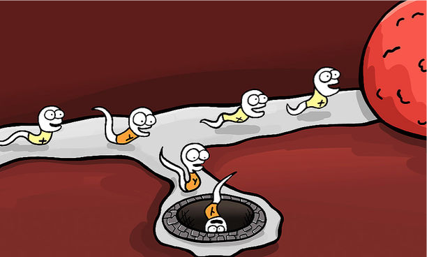 sex_preselection_cartoon_edited