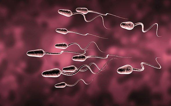 01-28649-spermien (1)