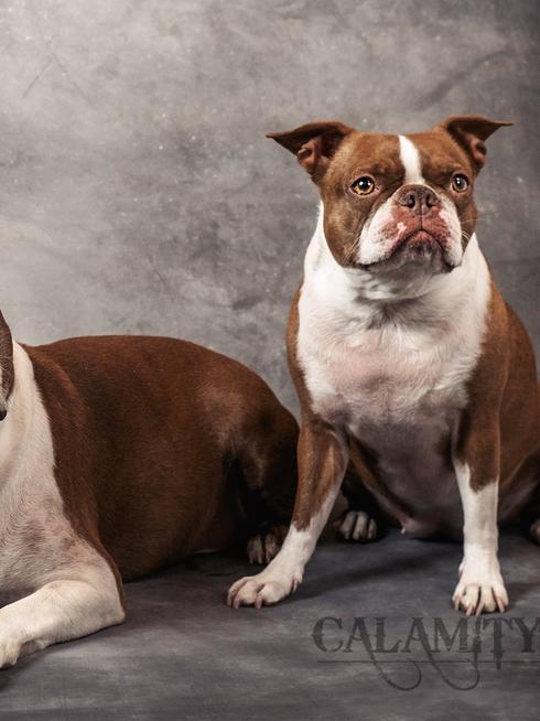 Dogs of Las Vegas