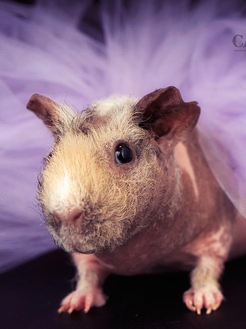 Las Vegas Pet Portraits