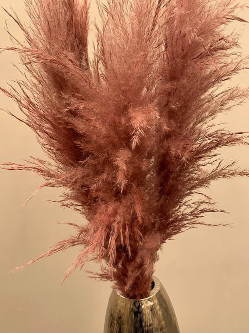 Dusty Pink Pampas