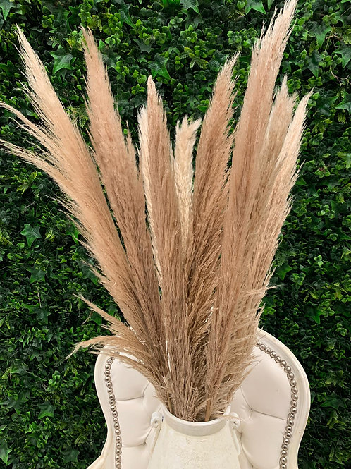 Pampas Colour Natural