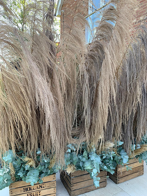 Dried Pampas Stems