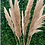 Thumbnail: Natural Pampas - 110CM