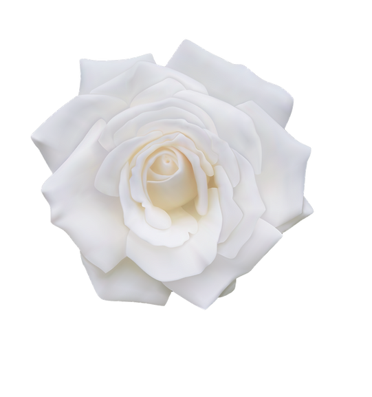 stock-vector-realistic-white-rose-vector