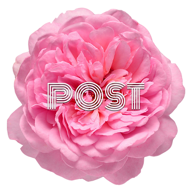 Pink Flower Post.png