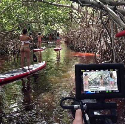 Video mangroves
