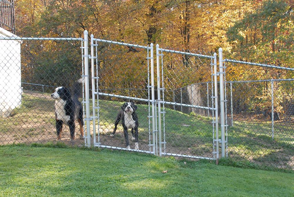 Dog-Yard-Protection-Chain Link-Fence-Installation in Harrisburg-Carlisle-Mechanicsburg-Dillsburg-York-Camp Hill-PA