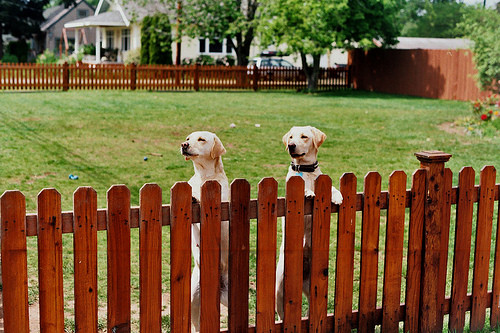 Dog-Pet-Fence-Protection-Containment-Yard-Wood-Picket-Fence-Installation in Harrisburg-Carlisle-Mechanicsburg-York-Dillsburg-Camp Hill-Enola-PA