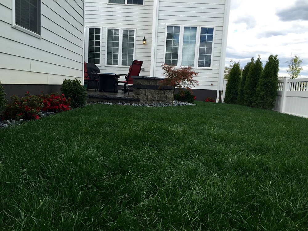 new-grass-planted-patio-small-yard-landscpaing